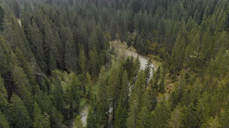местность : Aerial view of the turbulent river flowing among the spruce forest in the highlands. The concept of rafting