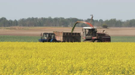 olej : Side view of the harvester red and blue tractor, producing cleaning yellow rapeseed at farmers  fields. The raw material is poured from the agricultural machine into a brown trailer, the heat comes out of the pipe Dostupné videozáznamy