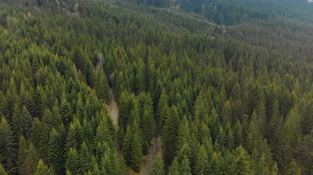 preservation : The tops of coniferous forests in the mountains. Wild, pristine nature from a birds-eye view