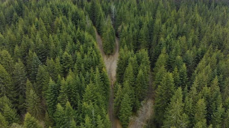 Észak amerika : The tops of coniferous forests in the mountains. Wild, pristine nature from a birds-eye view