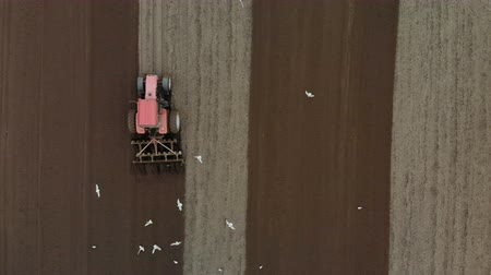 földműves : Top view of a red tractor cultivating an agricultural field with dark brown soil, behind the car flies a lot of white birds, seagulls. Preparation for sowing campaign Stock mozgókép