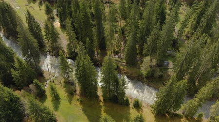 Aerial view of a fast-flowing mountain river and parallel to a muddy country road among green spruce trees in the forest. Spring Carpathians, Tatras, Alps
