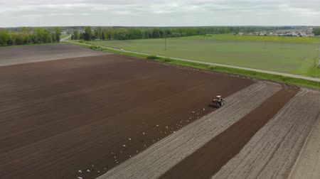gleba : Aerial view of a farmer in a Tractor preparing the soil with a cultivator seedbed in picturesque farmland. The agricultural machine is followed by many white and black birds