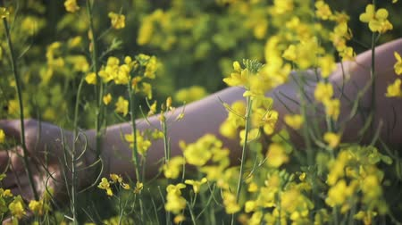 A womans hand strokes the flowers close - up in a field of yellow flowering rapeseed. Agriculture, cultivation of crops Стоковые видеозаписи