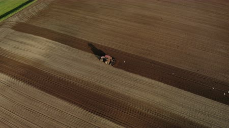 Aerial drone shot on red tractor with dual wheels doing the processing brown soil with the disk cultivator, the car falls a long shadow. Agricultural sowing campaign the farmers