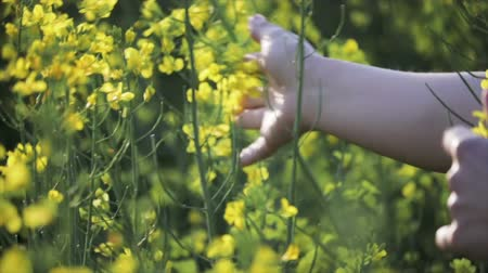 A womans hand strokes the flowers close - up in a field of yellow flowering rapeseed. Agriculture, cultivation of crops Stock Footage