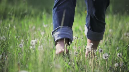 A man in jeans and barefoot runs through a field of white dandelions. Dandelion fluff flies in the wind. Togetherness and enjoyment of nature