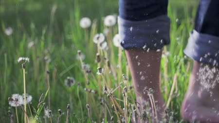 Bare feet whipped white fluff of a dandelion. Guy in jeans runs on green the grass. Fun, summer and nature