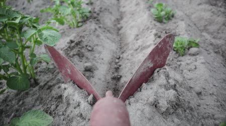 solo : POV slow motion shot closeup ploughshares hill farm potatoes. Seasonal treatment of root crops, the formation of ridges. Natural and healthy food Stock Footage
