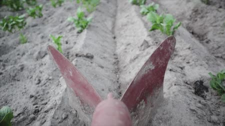 ポテト : POV slow motion close-up of plowshare, Hiller. Seasonal processing of root crops, the formation of ridges. Natural and healthy food