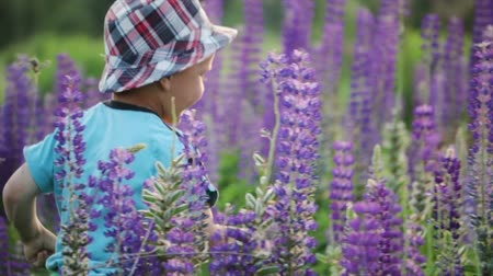 nachový : Boy walking with his mother in the meadow. A small, comical child in a hat runs away from his mother. A woman in a summer blue dress catches her son in purple flowers. Happy childhood, the concept of motherhood Dostupné videozáznamy