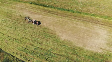 çiftlik hayvan : Top view of the tractor raking green grass using a rake-tedder. Hay harvesting for cattle feed