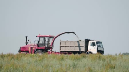 mow : BELARUS, BOBRUISK-JUNE 12, 2019. Side view of a self-propelled mower removing green grass for silage in a dump truck. Fodder for the winter Stock Footage