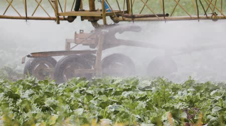засуха : Self-propelled sprayer treats cabbage plants in an agricultural field in Sunny clear weather. Close-up of the support wheels Стоковые видеозаписи