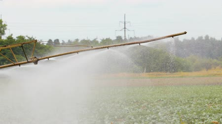 засуха : Self-propelled sprayer treats cabbage plants in an agricultural field in Sunny clear weather. Close up
