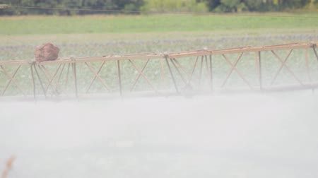 орошение : Self-propelled sprayer treats cabbage plants in an agricultural field in Sunny clear weather. Close up