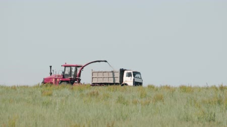 ciężarówka : Side view of a self-propelled mower removing green grass for silage in a dump truck. Fodder for the winter Wideo