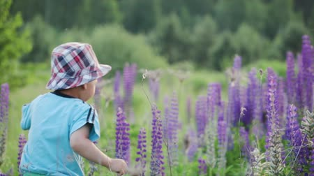kwiaty polne : The boy walks with his mother in the meadow. A small, funny child in a hat runs away from his mother. A woman in a summer blue dress catches her son in purple flowers. Happy childhood, the concept of motherhood