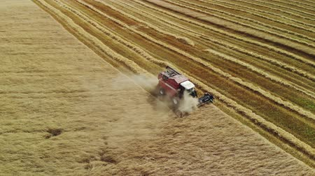 nasiona : Aerial view of the red harvester removing rows of plants grain crops in Sunny summer weather Wideo