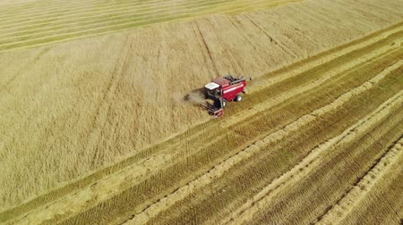 otomatik : Aerial view of the red harvester removing rows of plants grain crops in Sunny summer weather Stok Video
