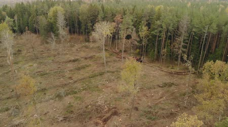 лесозаготовки : Aerial view of empty space from cutting down trees in coniferous forest and logging tractor. The problem of ecology, deforestation