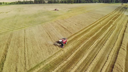 reaper : Aerial view of the flight in an arc of two red harvesters working in a wheat field. Harvesting of grain crops in dry hot summer weather Stock Footage