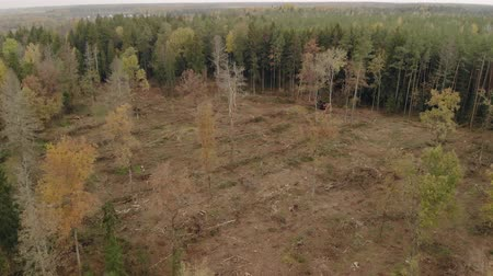 lugares : Aerial view of empty space from cutting down trees in coniferous forest and logging tractor. The problem of ecology, deforestation