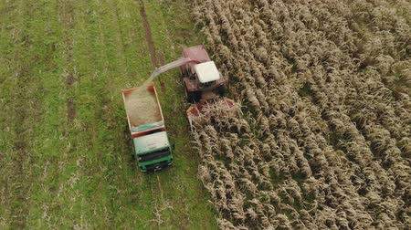 rijp : Aerial view of a self-propelled harvester with a rotary Reaper, harvesting ripe dry corn in the body of a truck
