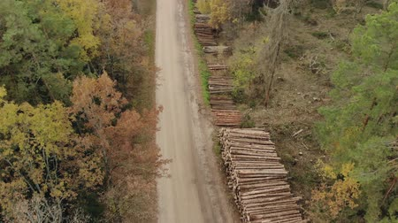 softwood forest : Aerial view of stacks with lots of logs, trunks of felled trees stacked along the gravel road. The concept of the destruction of the forest