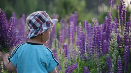 coletando : Beautiful, cute boy in a hat collects a bouquet of wild flowers in a meadow. He picks a purple lupin flower. Baby son with beautiful flowers as a gift for his beloved mother