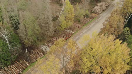 лесное хозяйство : Aerial view of stacks with lots of logs, trunks of felled trees stacked along the gravel road. The concept of the destruction of the forest
