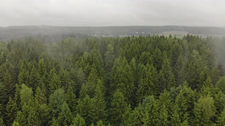 esplendor : Aerial view of autumn mists emanating from the green coniferous trees of fir trees in the forest. Magnificent scenery and beauty of wildlife Vídeos