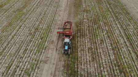 batatas : Aerial view of a blue tractor with a trailed potato harvester red. Autumn harvesting of root crops by agricultural machinery with a sorter on Board, the products are collected in a hopper