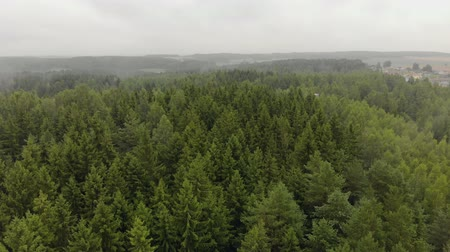 köknar ağacı : Aerial view of autumn mists emanating from the green coniferous trees of fir trees in the forest. Magnificent scenery and beauty of wildlife Stok Video