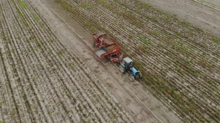 batatas : Aerial view of the operator-sorter potato harvester, discarding impurities from the conveyor in front of the hopper of the agricultural machine during harvesting of root crops. Concept of agribusiness