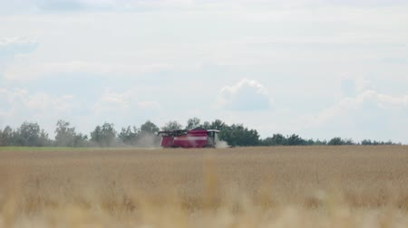 kenyér : Side view of the combine harvester red removing ripe orange ears of rye, wheat in dry Sunny summer weather. Dust rises from under the reel. The concept of agribusiness