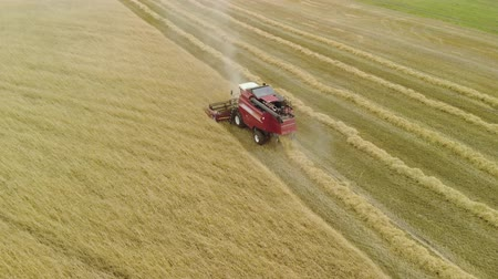 poros : Aerial view combine harvester red removing ripe orange ears of rye, wheat in dry Sunny summer weather. Dust rises from under the reel. The concept of agribusiness Stock mozgókép
