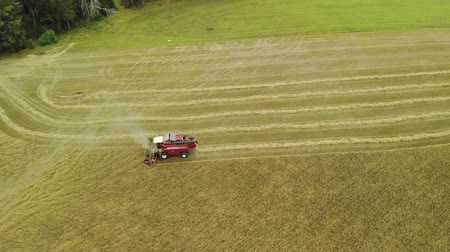 kenyér : Aerial side view of the combine harvester red removing ripe orange ears of rye, wheat in dry Sunny summer weather. Dust rises from under the reel. The concept of agribusiness Stock mozgókép