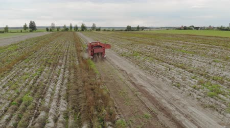 borowina : Aerial view of the rear attached to the tractor potato harvester, digging up the soil and harvesting root crops. Sorter stands at the conveyor and removes debris before loading into the hopper