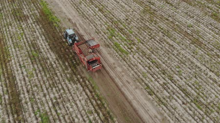 batatas : Aerial view from above attached to the tractor potato harvester, digging up the soil and harvesting root crops. Sorter stands at the conveyor and removes debris before loading into the hopper Stock Footage