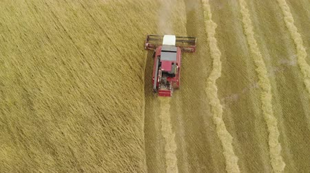 poros : Aerial view from above combine harvester removal of ripe orange ears of rye, wheat in dry Sunny summer weather. Dust rises from under the reel. The concept of agribusiness