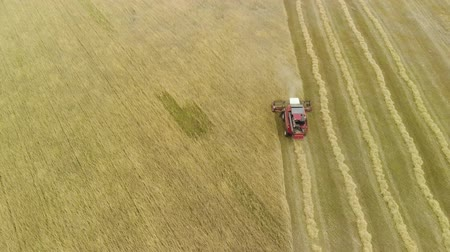 kenyér : Aerial view from above combine harvester removal of ripe orange ears of rye, wheat in dry Sunny summer weather. Dust rises from under the reel. The concept of agribusiness