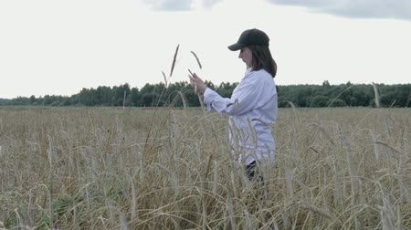 rijp : Young farmer girl in wheat field. She uses a tablet, makes calculations and plans to harvest. The concept of using modern technologies and mobile applications in agricultural production