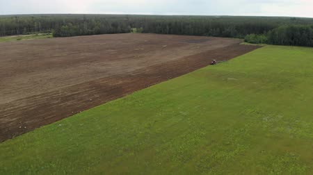 maquinaria : A red agricultural tractor with a long plow plows the soil, many birds fly around it. A beautiful picture of a brown-green field on top. Aerial photography from a drone Archivo de Video