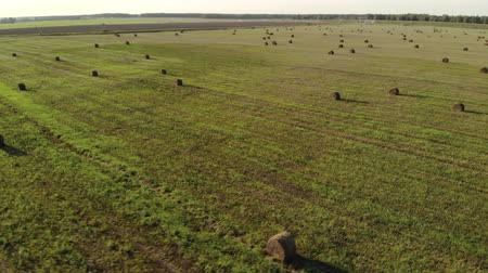 rulolar : Aerial view of many rolls of pressed grass with shade from the sun located on an agricultural field in summer weather. The concept of agribusiness