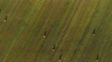 tahıllar : Aerial view of many rolls of pressed grass with shade from the sun located on an agricultural field in summer weather. The concept of agribusiness