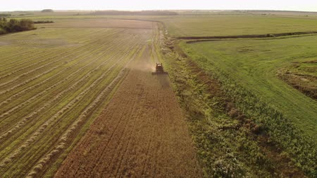tahıllar : Aerial view of a farmer on a vintage brown harvester harvesting crops from a dusty field on a warm summer evening. The concept of seasonal agribusiness