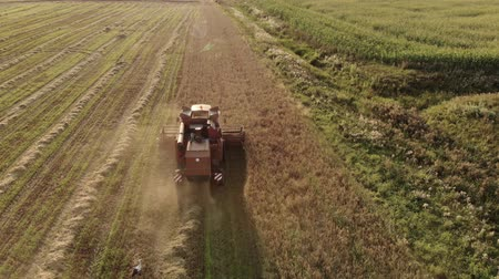 収穫 : Aerial view of a farmer on a vintage brown harvester harvesting crops from a dusty field on a warm summer evening. The concept of seasonal agribusiness