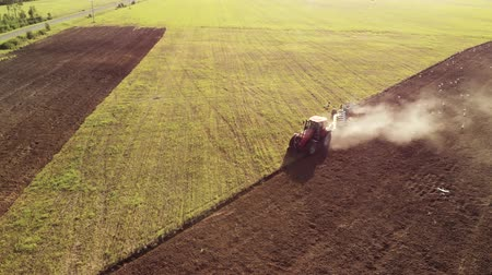 çiftlik hayvan : Aerial view of a farmer on a modern tractor cultivating brown dusty soil on a Sunny summer evening. Many white storks follow the agricultural machine in search of food. The concept of agribusiness