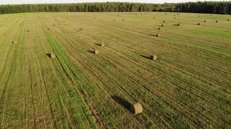стеки : Aerial view a lot of yellow bales of straw, lying in a farmers field on forest background Стоковые видеозаписи